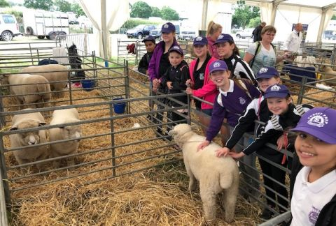The Cheshire Show